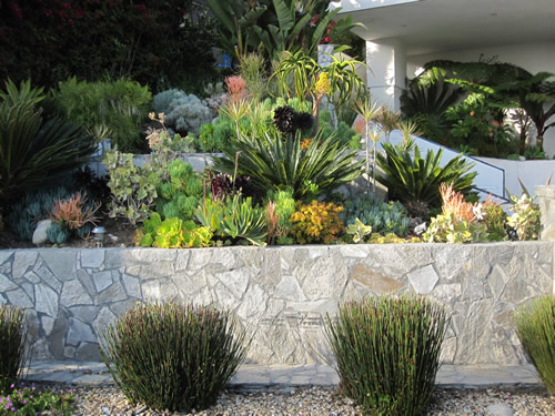 Terraced display of low water use plants